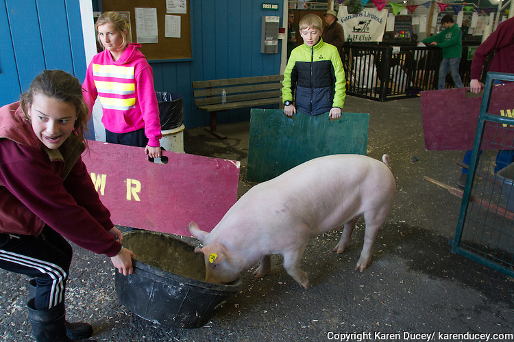 "Camryn Berryhill, 15, a student at White River High School, coaxes her pig towards it's bath by dragging a food bowl at the Northwest Junior Livestock Show at the Washington State Spring Fair in Puyallup, Washington on April 17, 2015. ""I live in a development and being able to do this outside of a city is different. I like it."" she said."