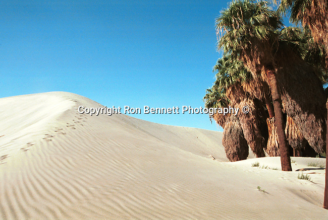 Desert sand dune mirage with palms Palm Springs California, Fine Art Photography by Ron Bennett, Fine Art, Fine Art photography, Art Photography, Copyright RonBennettPhotography.com © Fine Art Photography by Ron Bennett, Fine Art, Fine Art photography, Art Photography, Copyright RonBennettPhotography.com ©