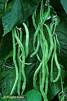 HS30-009a  Bean - green string beans, french filet - Fortex variety