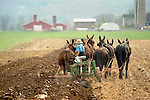 Nippenose Valley. Young amishman plowing in Spring with four mule team.
