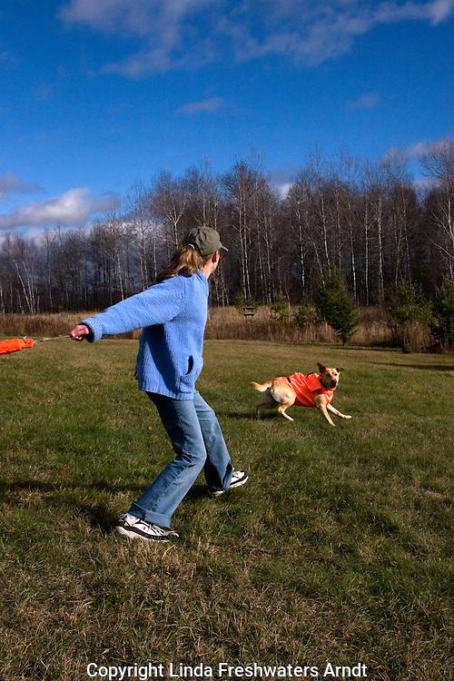 Young girl throwing an orange dummy for a yellow Labrador retriever (AKC).  Fall.  Winter, WI.