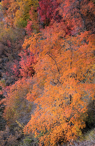 Autumn has arrived at Zion National Park