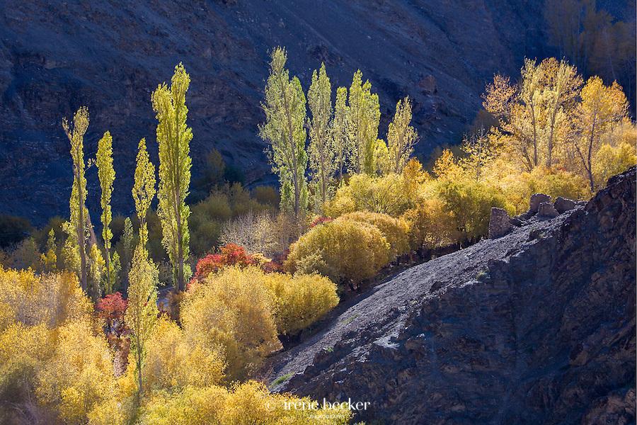 Autumn In The Himalayas. Ladakh, Jammu and Kashmir, India