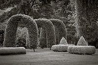 Vashon Island, Washington:<br /> Hornbeam (Carpinus betulus) arches and boxwood hedges at Froggsong Garden, Summer