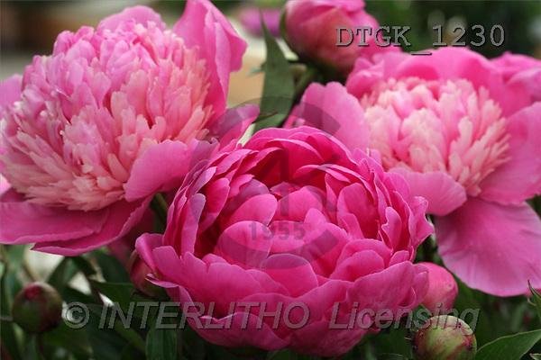 Gisela, FLOWERS, photos(DTGK1230,#F#) Blumen, flores, retrato