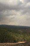 Israel, Southern Hebron Mountain, Yatir Forest