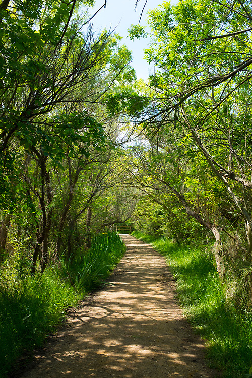 Near Estany del Cortalet, Aiguamolls de l'Empordà Natural Park, the 2nd most important wetland area in Catalonia.
