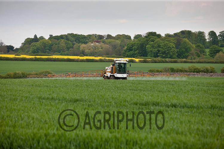 Knight sprayer working in Winter Wheat