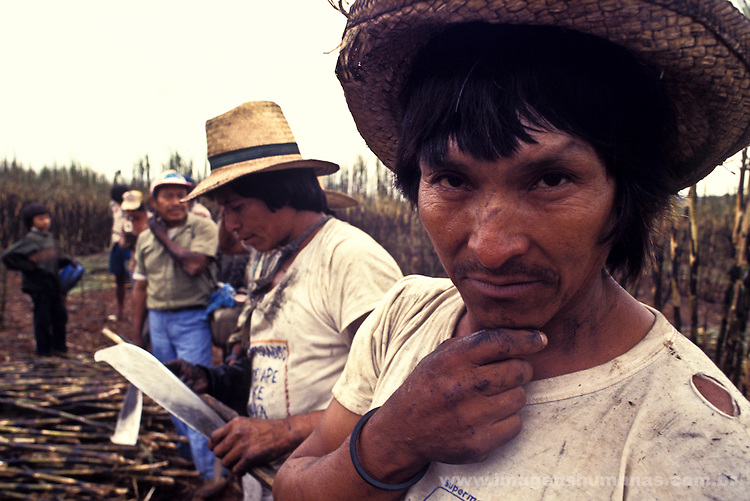 Biofuel production, Guarani indigenous people working as sugarcane cutters, ethanol plant, Navirai city, Mato Grosso do Sul State, Brazil.
