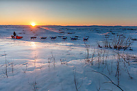Ralph Johannessen runs past an overflow glacier at sunrise as he leaves the Koyuk checkpoint on Monday March 14th during the 2016 Iditarod.  Alaska    <br /> <br /> Photo by Jeff Schultz (C) 2016  ALL RIGHTS RESERVED
