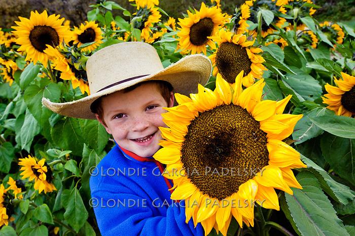 'Biggest sunflower I ever did see!'  Avila Valley Farm, San Luis Obispo County, California (Ethan Lazanoff)