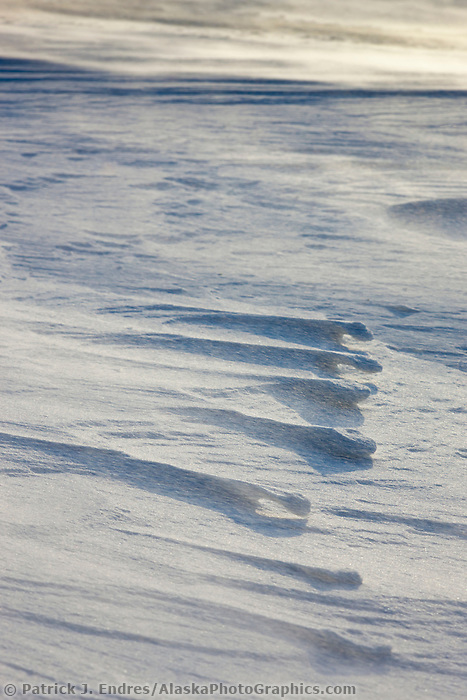 Arctic fox tracks along a wind blown snow drift ridge along the Beaufort sea on Barter Island, arctic, Alaska.
