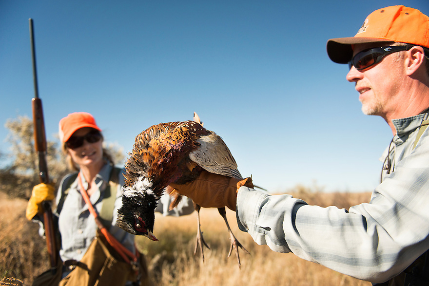 David Thompson, of Bozeman, Montana, holds a rooster while pheasant hunting near the Missouri River Breaks.