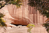 Cottonwood trees frame the White House Ruins in the Autumn, Canyon de Chelly, Arizona.