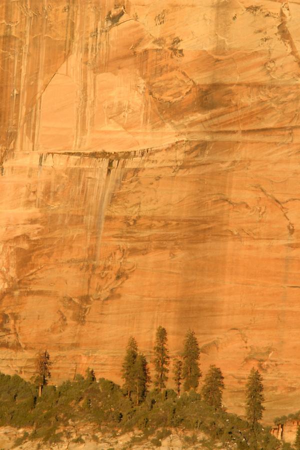 Trees up against orange Canyon wall, Zion National Park, Washington County, UT