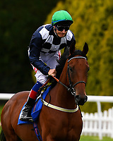 Matewan ridden by F.M. Berry goes down to the start of the  M J Church British EBF Novice Stakes (Plus 10) (Div 2),  during Afternoon Racing at Salisbury Racecourse on 7th August 2017