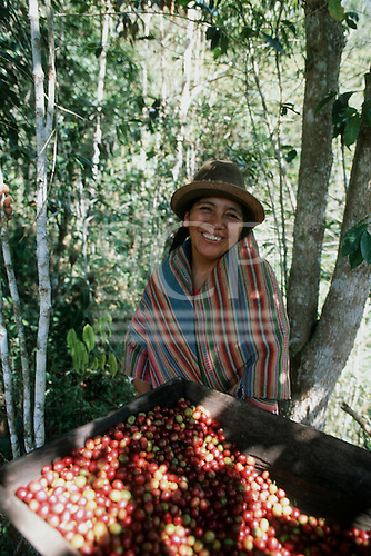 San Juan del Oro, Peru. Fair Trade woman farmer with freshly picked coffee beans.
