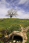 Israel, Upper Galilee, a water cistern at Hurvat Beck on Mount Meron, a Walnut tree is in the background