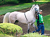 Taylors Touchof Class The Buzz Brauninger Arabian Distaff (grade 1) at Delaware Park on 9/2/16