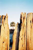 Photo of Palmetto Tree- Charleston, SC