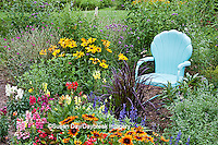 63821-206.02  Blue chair in flower garden with Red Dragon Wing begonia (Begonia x hybrida), Autumn Colors Black-eyed Susans (Rudbeckia hirta 'Autumn colors'), Snapdragons (Antirrhinum),  Blue Victoria Salvia (Salvia farinacea), Indian Summer Rudbeckia (Rudbeckia hirta 'Indian Summer'), Walker's Low Catmint (Nepeta x faassenii) Purple Fountain Grass (Pennisetum setaceum 'Rubrum') Marion Co. IL