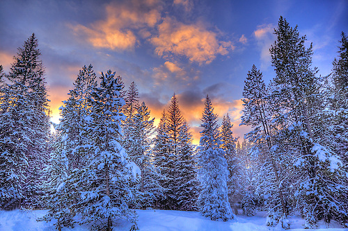 THE SUN SETS BEHIND A STAND OF SNOW-COVERED FIR TREES IN YELLOWSTONE NATIONAL PARK,WYOMING