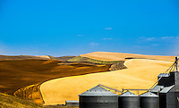 An abstract array of fields of wheat on the Palouse. Some harvested and prepared for the next planting. Others harvested but untilled. Some yet to be harvested. Sharply demarkated scrub land and slopes. Contrasted with the utilitarian, engineered formality of the grain elevators.