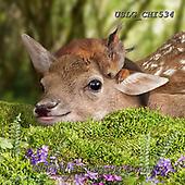 CHIARA,REALISTIC ANIMALS, REALISTISCHE TIERE, ANIMALES REALISTICOS, paintings+++++,USLGCHI534,#A#, EVERYDAY ,photos