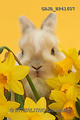 Kim, EASTER, OSTERN, PASCUA, photos+++++,GBJBWP41607,#e#