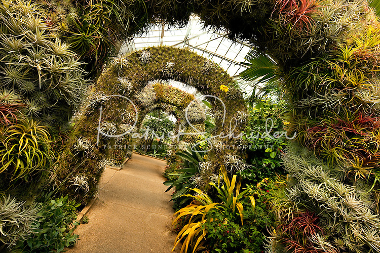 The Orchid Conservatory At Daniel Stowe Botanical Garden. The Gardens  Attract Plant, Flower And