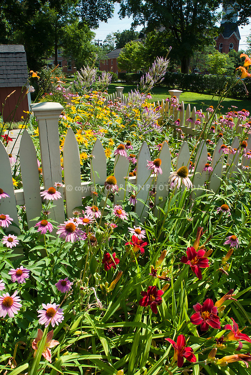 Summer flower garden with Echinacea purpurea purple coneflowers, Heliopsis, Veronicastrum Fascination, Hemerocallis daylilies, barn, blue sky on sunny day, perennials in lush bloom