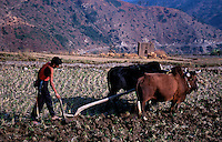 Farmer plowing with a team of oxen in Bhutan.