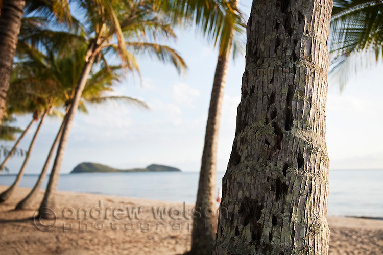 Coconut palm at Palm Cove with Double Island in background.  Palm Cove, Cairns, Queensland, Australia