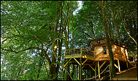 Ultimate treehouse escape for your inner Tarzan.