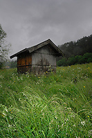 Wooden shed in high grass, Imst district, Tyrol/Tirol, Austria, Alps.
