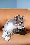 Gray Tabby Cat on Chair and Rug