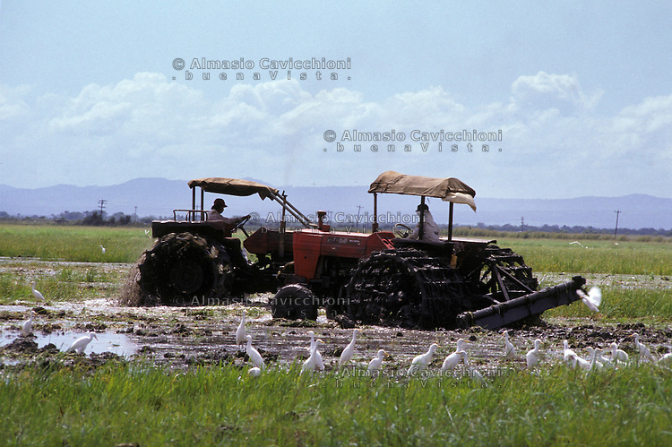 Novembre 1984, Nicaragua, Coltivazione di riso<br /> November 1984, Nicaragua, rice cultivation