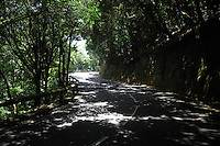 Shadows of branches and leaves on a curving road.Tenerife, Canary Islands, Spain