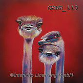 Simon, REALISTIC ANIMALS, REALISTISCHE TIERE, ANIMALES REALISTICOS, paintings+++++Card_AdamB_WeAreFamily,GBWR113,#a#, EVERYDAY,emu,ostrich