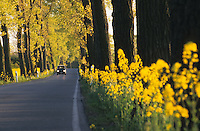 GERMANY, road with trees and rape seed field / DEUTSCHLAND, Landstrasse mit Baeumen und Rapsfeld