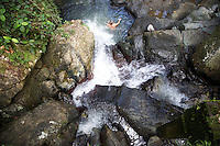 A man swimming at La Mina Falls in El Yunque, a subtropical mountainous forest in Puerto Rico, which is also the only tropical rainforest in the U.S. National Forest system, on 4th January 2012.