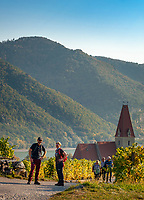 Oesterreich, Niederoesterreich, Kulturlandschaft Wachau - UNESCO Weltkultur- und Naturerbe, Weissenkirchen in der Wachau: Weinort am linken Donauufer mit der Pfarrkirche Mariae Himmelfahrt - wandern in den Weinbergen | Austria, Lower Austria, Wachau Cultural Landscape - UNESCO World's Cultural and Natural Heritage, Weissenkirchen in der Wachau: wine village on the left bank of the Danube with parish church Mary Assumption - hiking in the vineyards