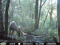 SVT Camera Trap Photos - August - October 6, 2011