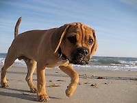 Dogs of Boston - Trot & Bernie
