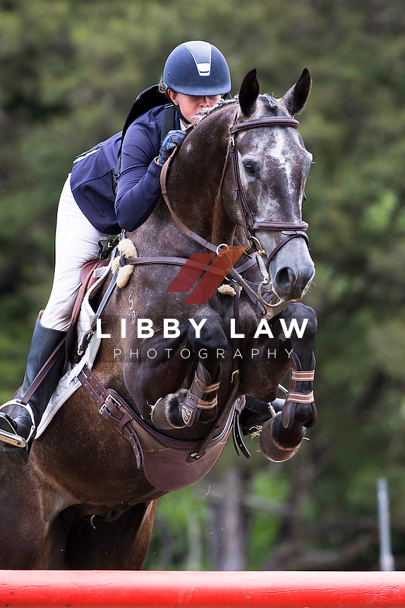 NZL-Samantha Felton (RICER RIDGE FIGARO MVNZ) NZPC 105B: 2015 NZL-Hunua Pony Club ODE (Saturday 31 January) CREDIT: Libby Law COPYRIGHT: LIBBY LAW PHOTOGRAPHY