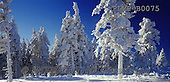 Marek, CHRISTMAS LANDSCAPES, WEIHNACHTEN WINTERLANDSCHAFTEN, NAVIDAD PAISAJES DE INVIERNO, photos+++++,PLMPB0075,#xl#