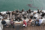 Visitors & CA sea lions at Santa Cruz Muni Wharf