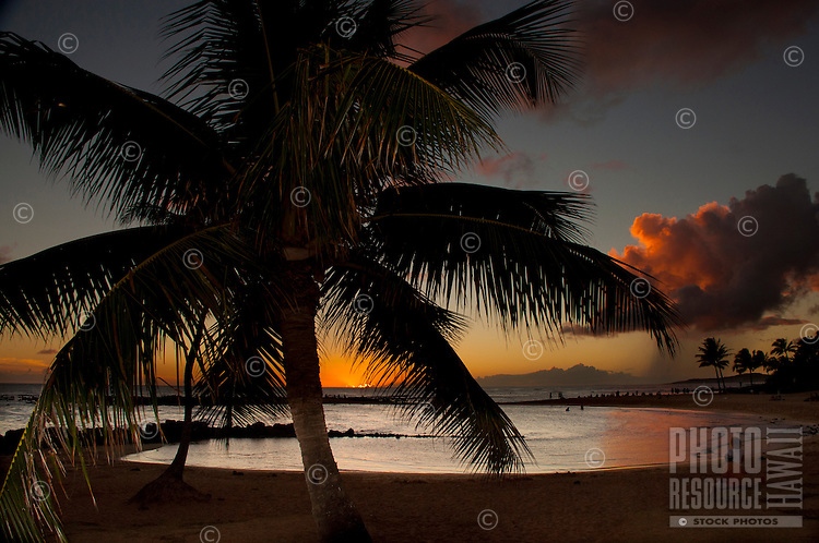 Palm trees and a beautiful sunset at Brennecke's Beach, Poipu, Kauai.