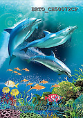 Alfredo, REALISTIC ANIMALS, REALISTISCHE TIERE, ANIMALES REALISTICOS, paintings+++++,BRTOCH50072CP,#A# ,dolphins ,puzzles