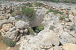 Punic phoenician rock tombs, Misrah Ghar il-Kbir, Siġġiewi, Malta